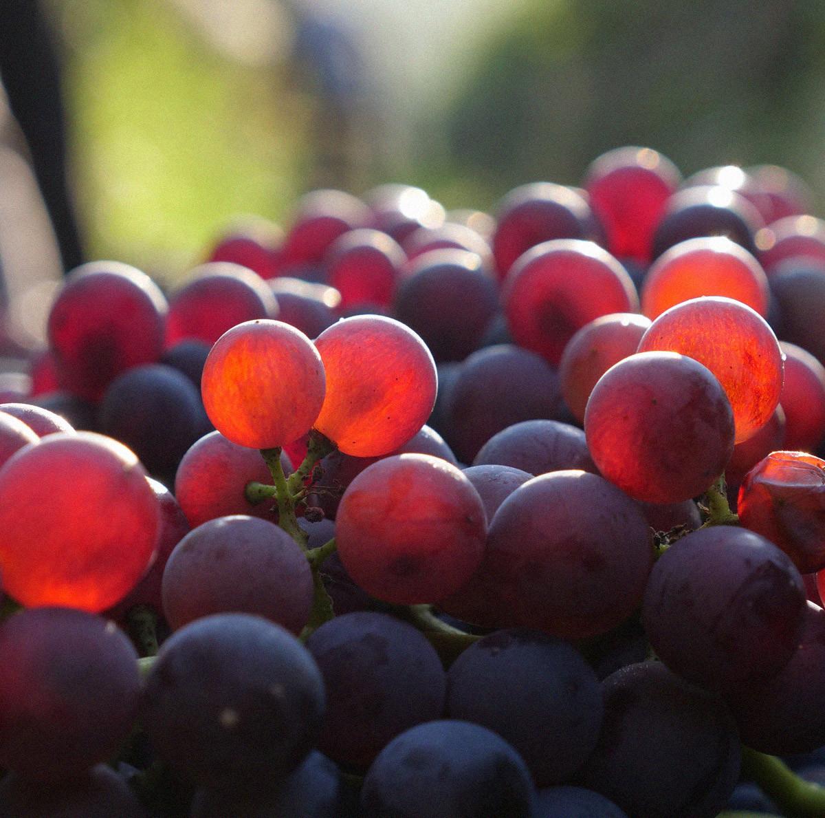 Una sfida continua nella terra del vino