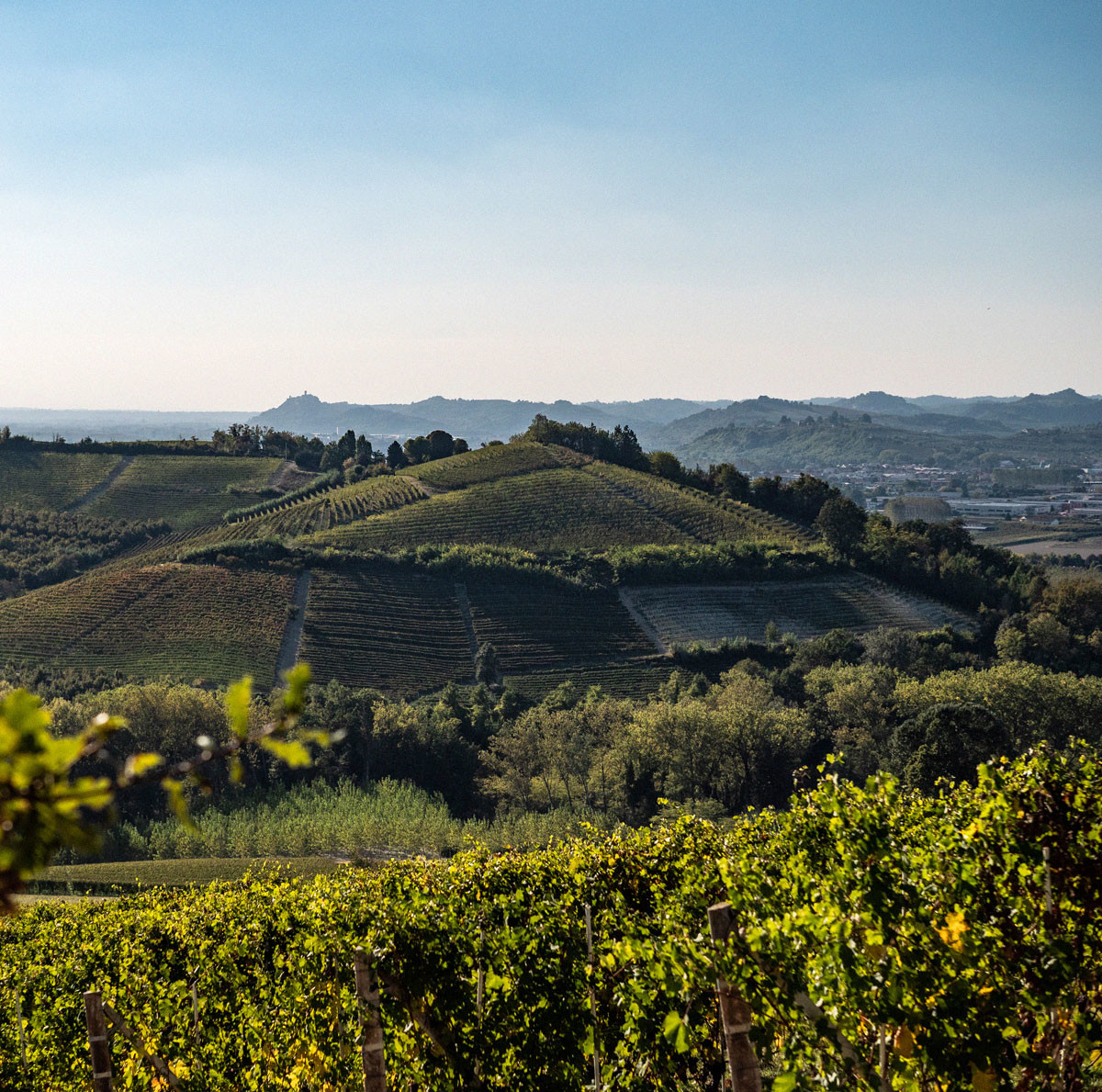 Barbaresco throughout history