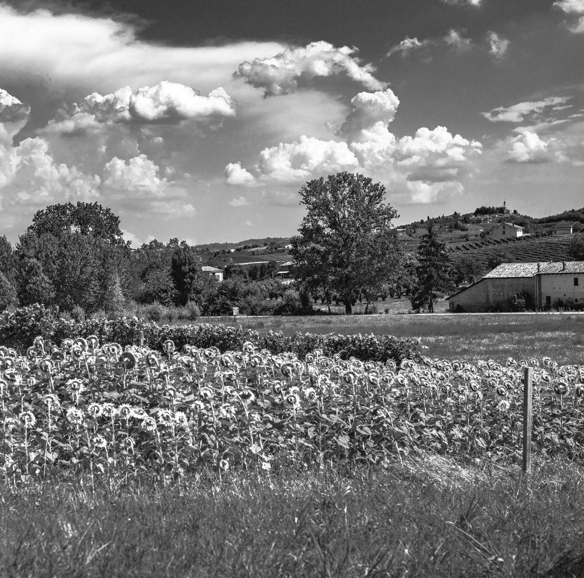 Monferrato throughout History