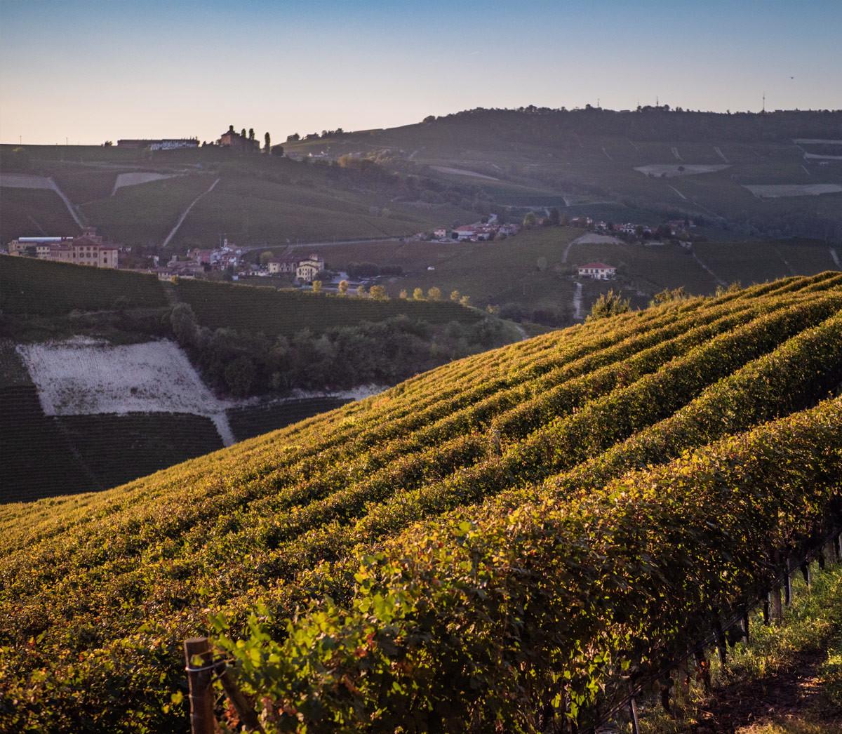 Le Langhe del vino