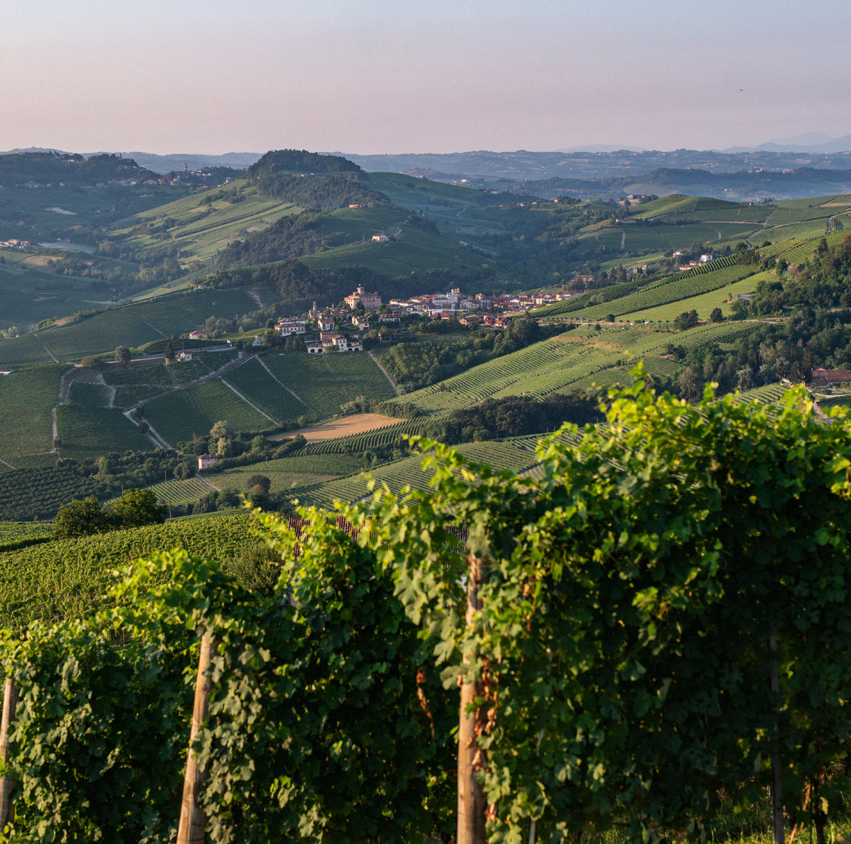 The History of Barolo